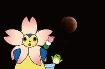 見られるかな?桜と皆既月食